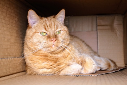 cat-1999679_1920