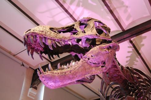 dinosaur-798706_1920
