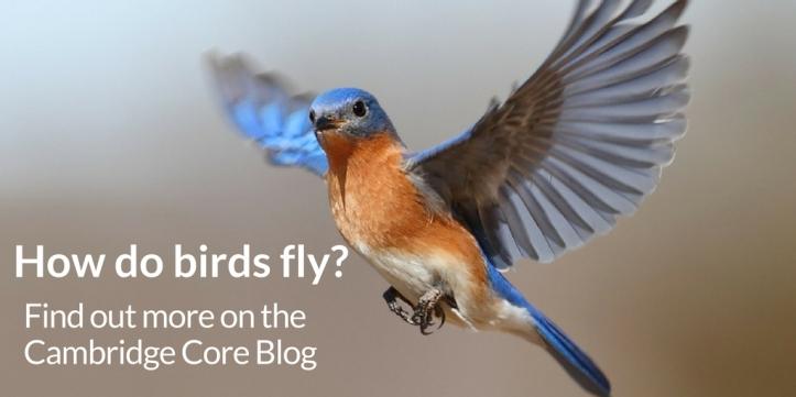 JFM - how do birds fly