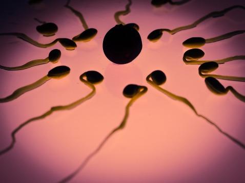 sperm-956482_1920