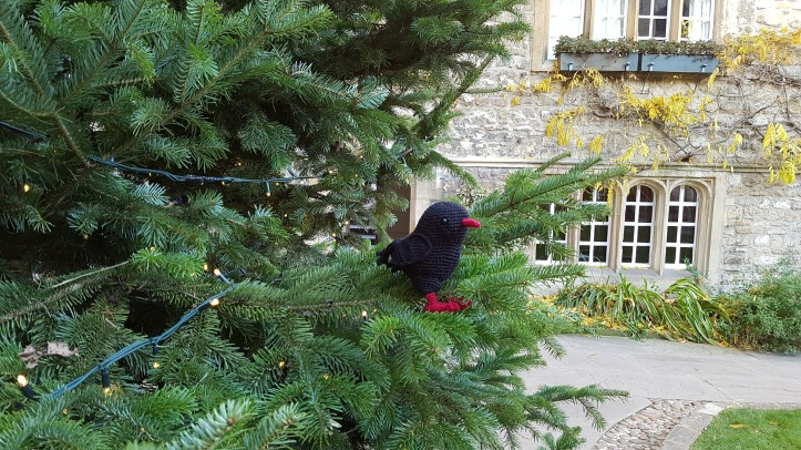 Chough in a Christmas tree.jpg