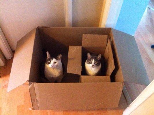 cat-box