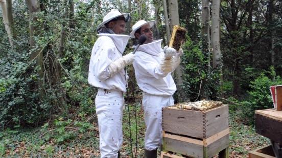 TomCrawford-bees